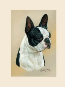 Original Boston Terrier Painting